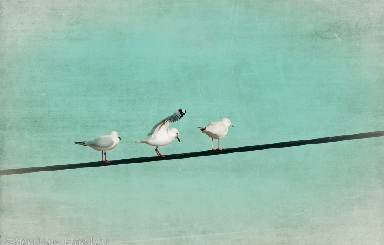 Фото обои птицы, стиль, цвет