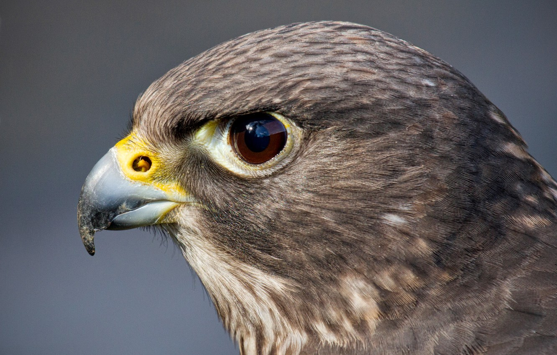 Картинки голова птиц