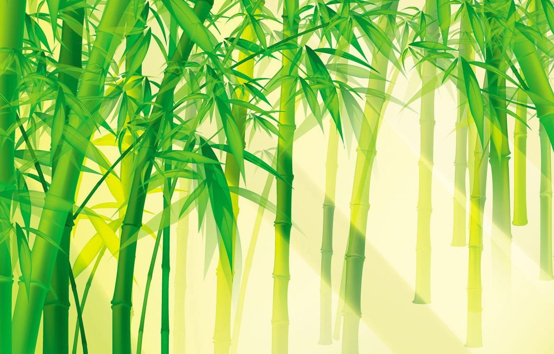 Фото обои зелень, свет, бомбук