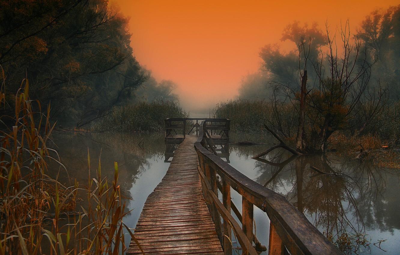 Фото обои деревья, туман, озеро, утро, деревяные мостки