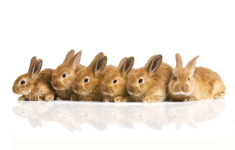 Фото обои кролики, компания, пушистики