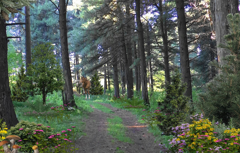 Фото обои дорога, цветы, грибы, кони, Лес, road, тайга, flowers, horses, mushrooms, Forest, Taiga