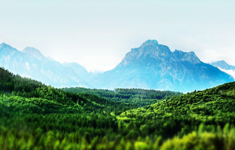 Фото обои лес, деревья, Горы