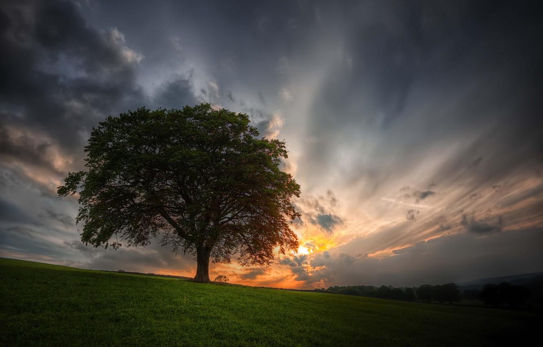 фото одинокого дерева наличии желания