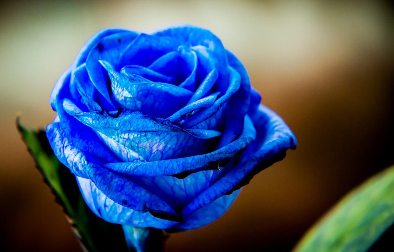 фотографии синих цветов да, вот