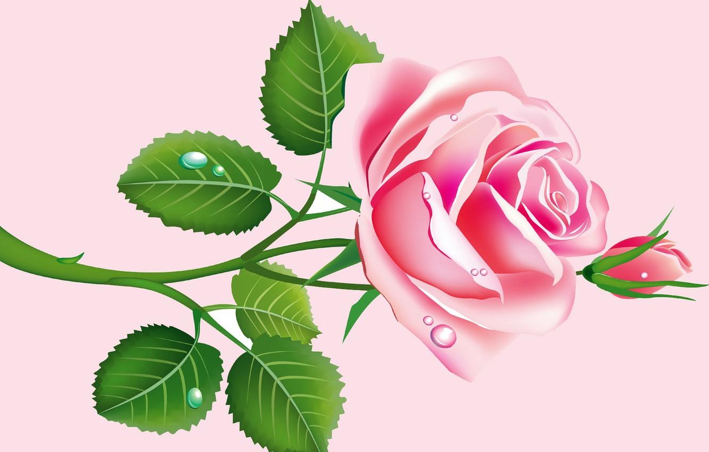 Фото обои листья, капли, роза, вектор, лепестки, бутон, открытка