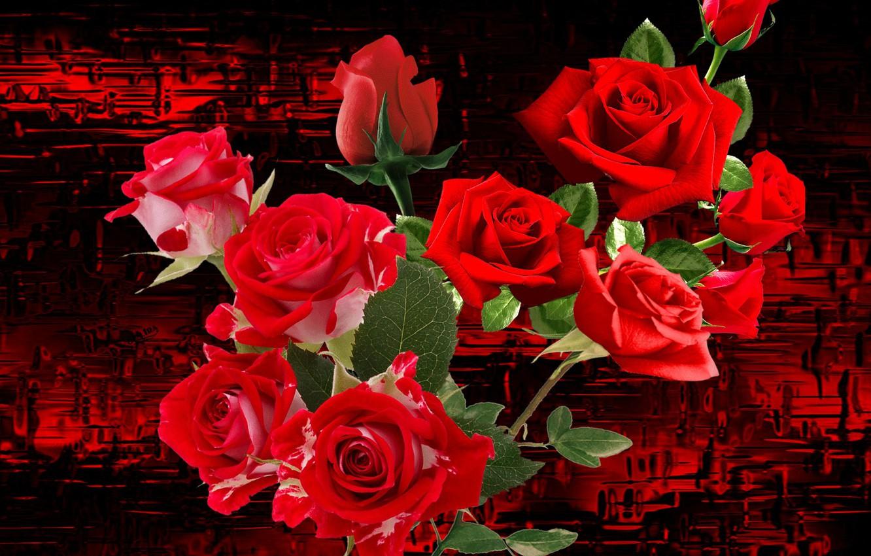 Фото обои цветы, фон, букет, Розы, обложка