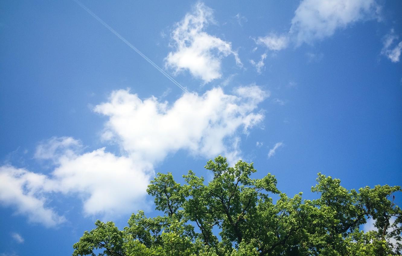 кто картинки небо и кусты все то, чем