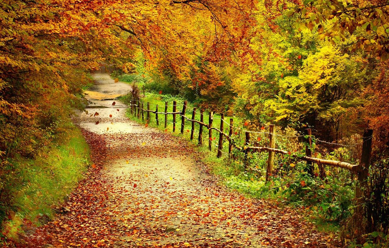Фото обои лес, листья, деревья, забор, Осень, тропинка