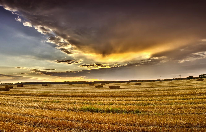картинки август поле