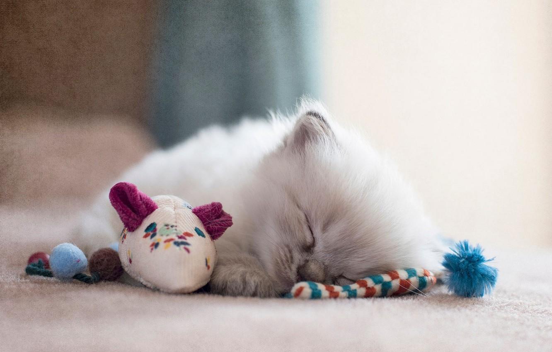 важно фото спящие котята пожалуй