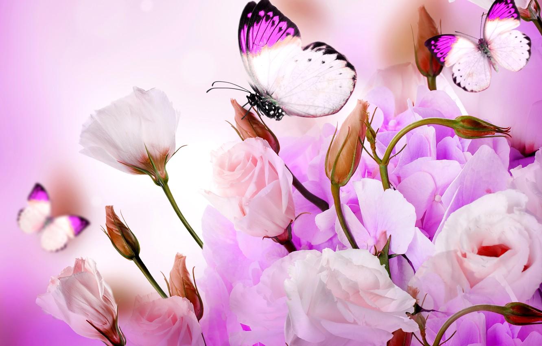 Обои мотылек, цветы, Коллаж. Разное foto 15