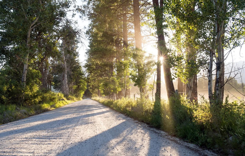 Фото обои дорога, свет, утро