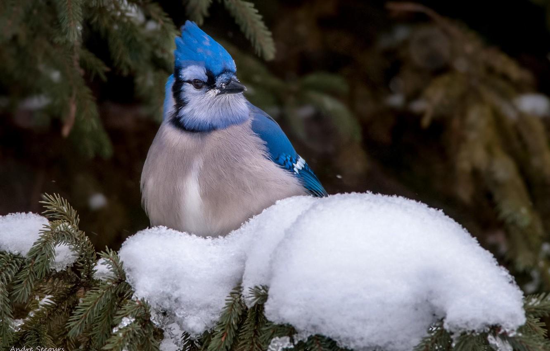 Фото птиц и животных зимой