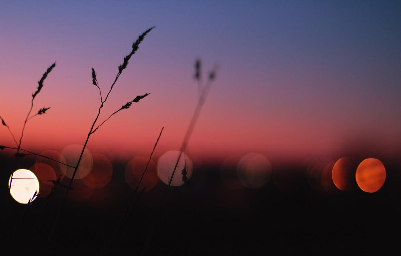 Фото обои lights, grass, twilight, sunset, dusk, globes
