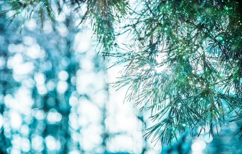коллекция картинок картинки зима природа снежинки слабое обжаривание