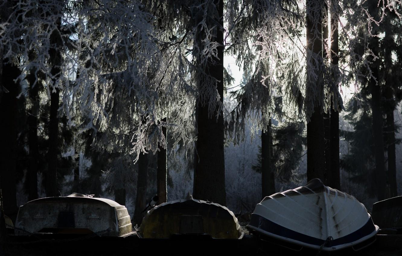 Фото обои иней, лес, деревья, лодки