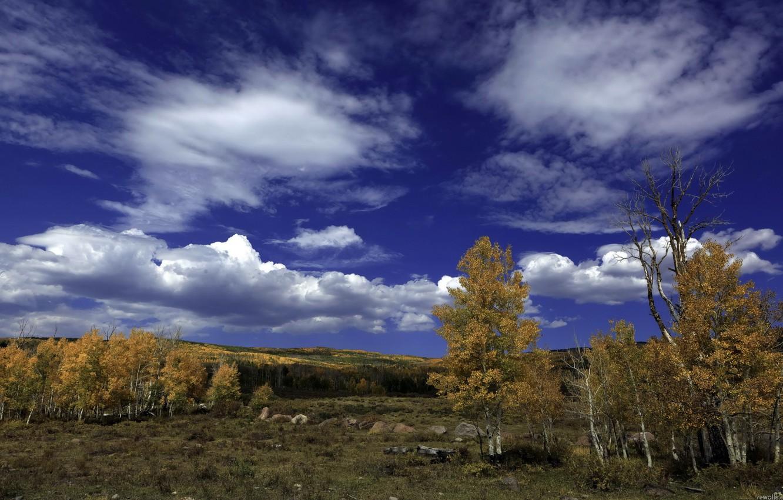 Фото обои осень, лес, небо, облака, деревья, пейзаж, камни, береза