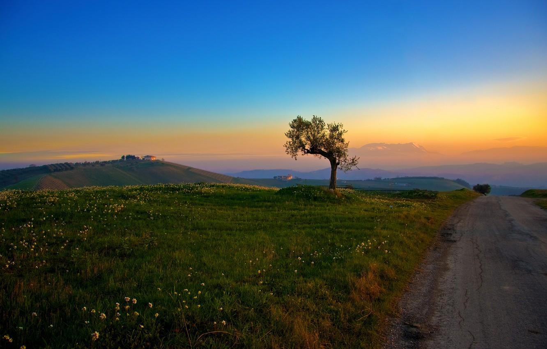 Фото обои дорога, трава, дерево, холмы, утро