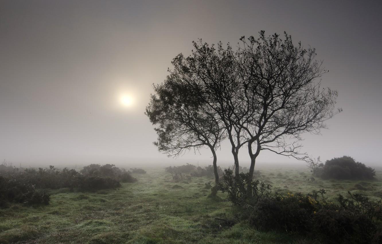 Фото обои лето, трава, деревья, туман, утро, кустарники