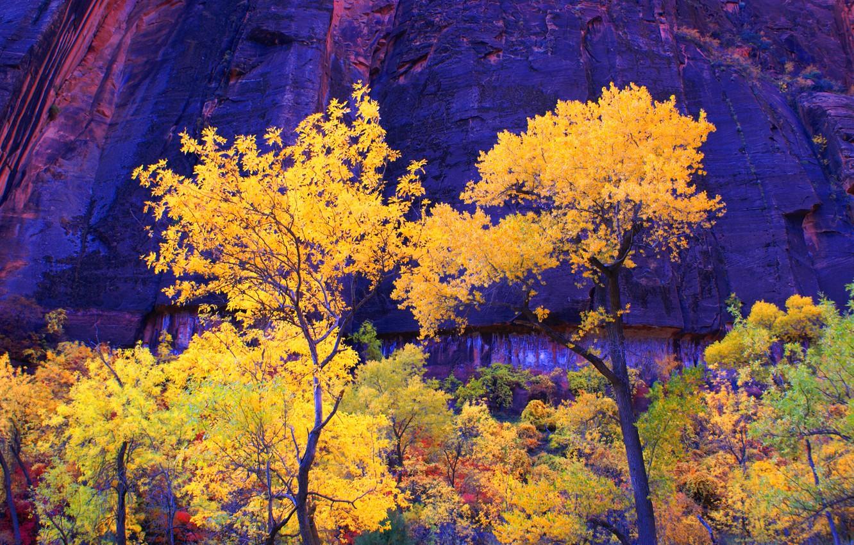 Фото обои осень, деревья, горы, скалы, Юта, США, zion national park