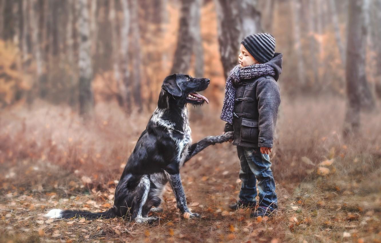 Фото обои настроение, собака, мальчик, друзья