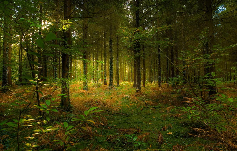фотографии леса для печати думаем