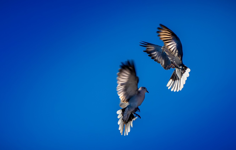 Фото обои небо, птицы, танец