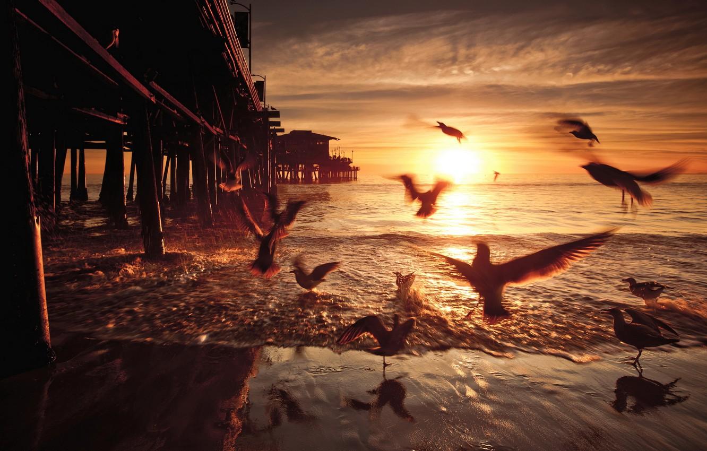 Фото обои закат, птицы, мост, United States, California, Santa Monica