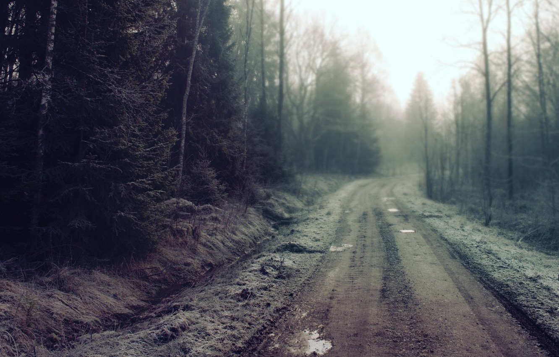 Фото обои дорога, лес, грязь