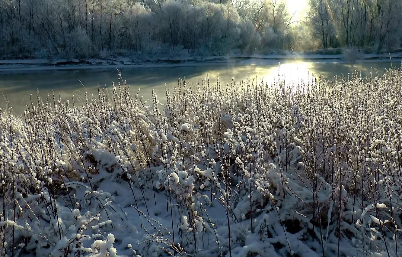 Фото обои иней, трава, снег, туман, Зима, утро