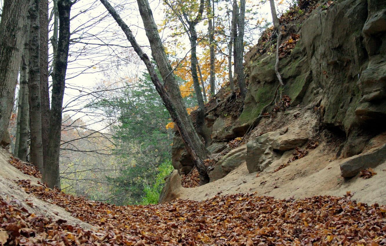 Фото обои листва, Осень, autumn, leaves, fall