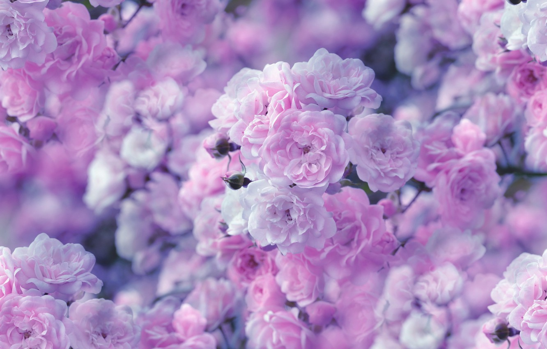 Обои цветок. Природа foto 7