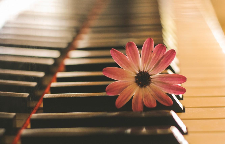 Фото обои цветок, музыка, пианино