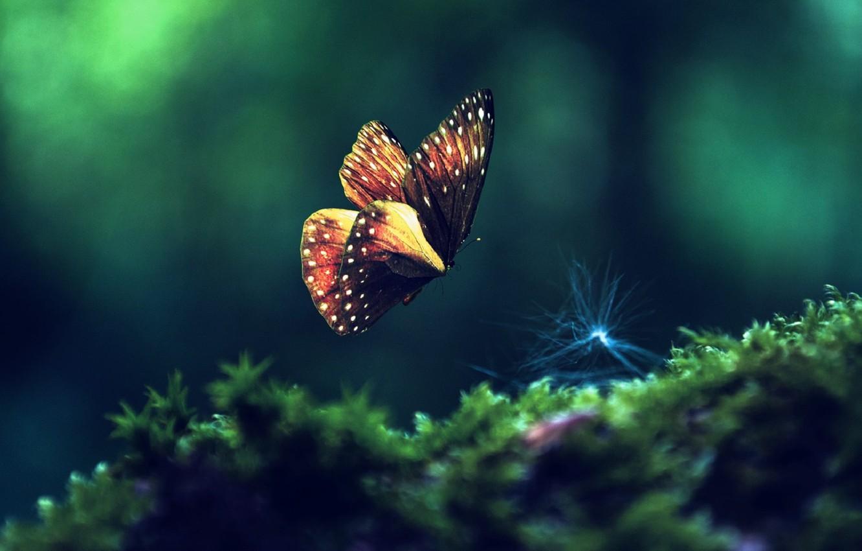 Фото обои зелень, макро, насекомые, бабочка