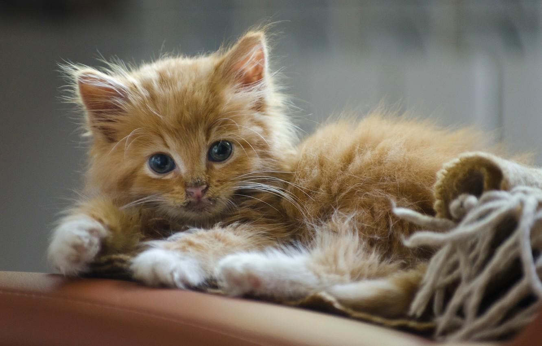 Рыжий котенок картинки фото