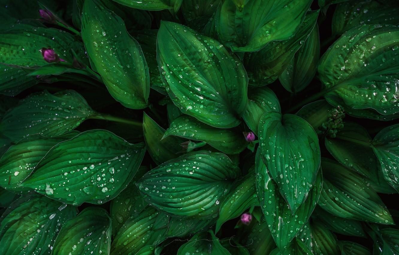 Красивые обои в зеленых тонах фото