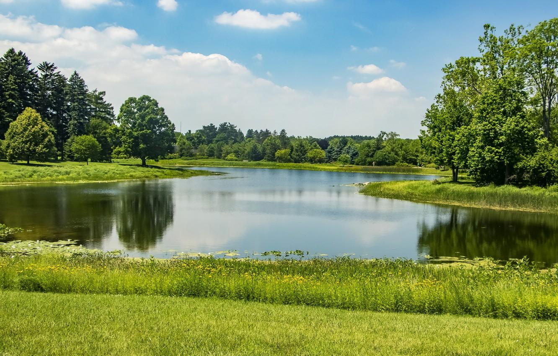 Фото обои зелень, лето, трава, солнце, деревья, пруд, парк, США, Northern Illinois, Morton Arboretum