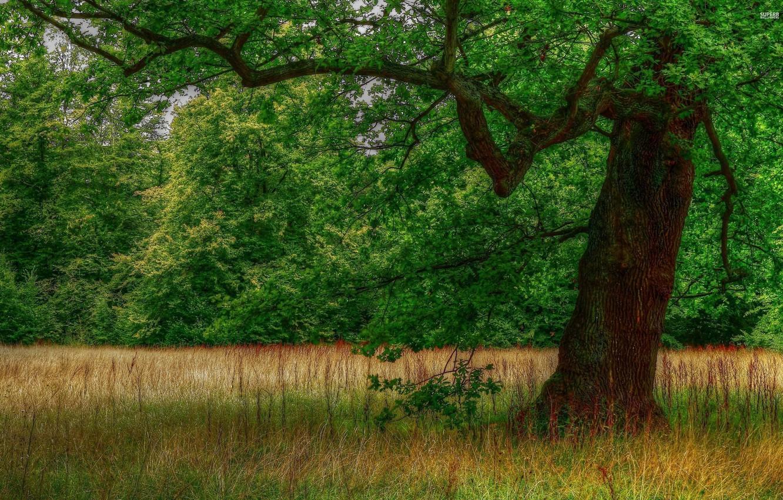 Деревья на поляне картинка