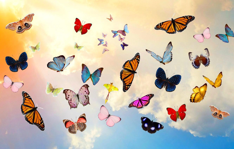 Имена, картинки на рабочий стол бабочки красивые