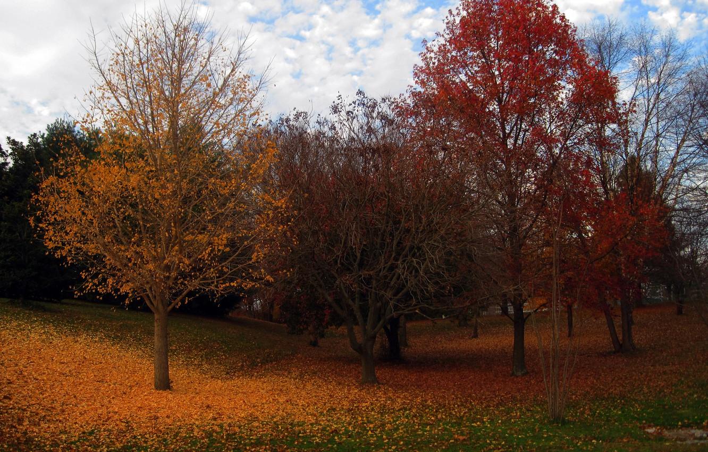 Фото обои осень, деревья, листва, colors, trees, leaves, Autumn fall
