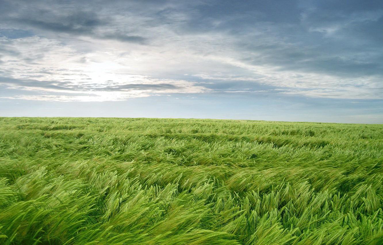 Фото обои зелень, трава, ветер, обоя