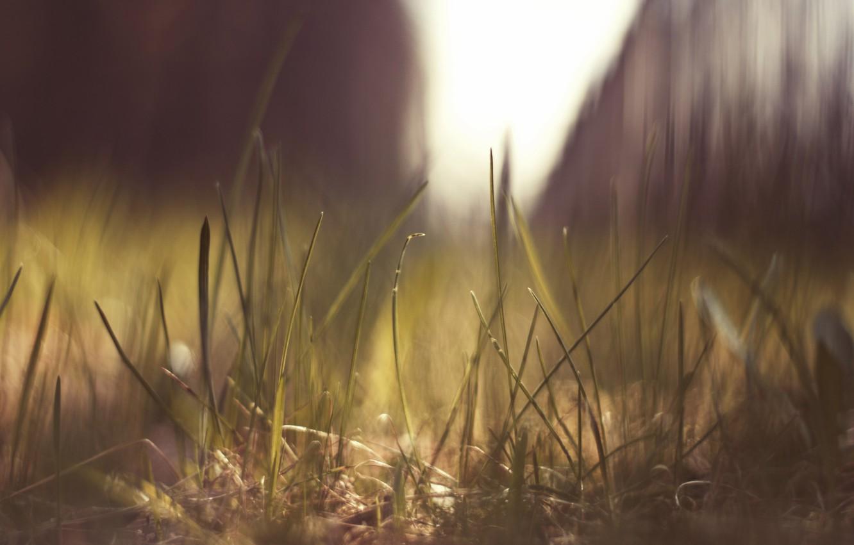 Фото обои трава, солнце, макро, природа, блики, земля, macro