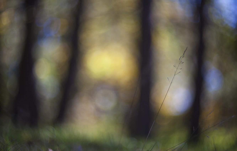 Фото обои трава, макро, блики, фокус, размытость, Стебелек