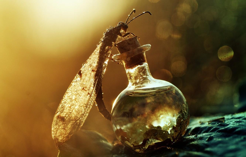 Фото обои макро, роса, стрекоза, насекомое, бутылочка