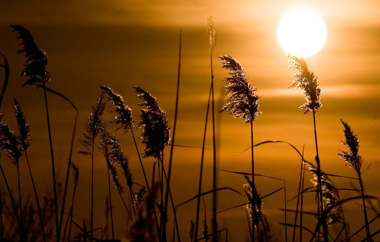 да, картинки закат и трава знаете основных ошибках