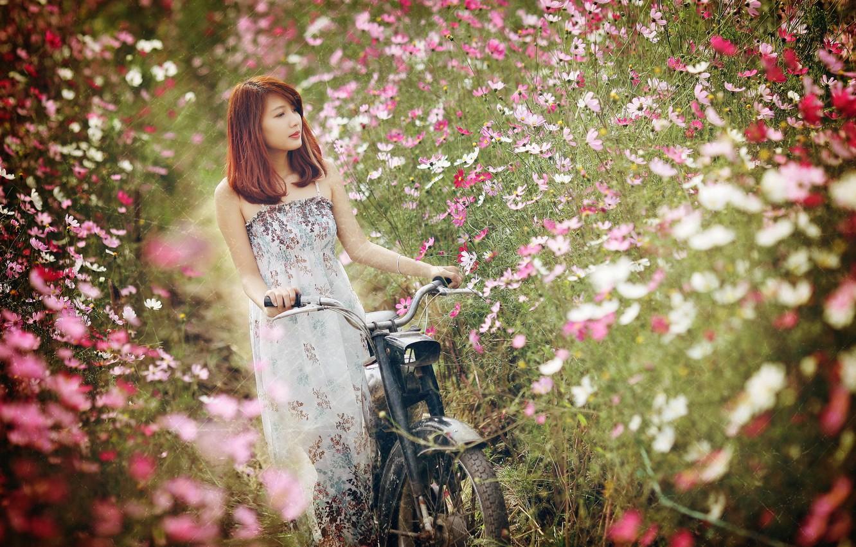 Фото обои девушка, цветы, велосипед