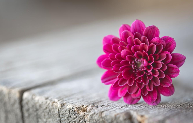 Обои цветок. Макро foto 6