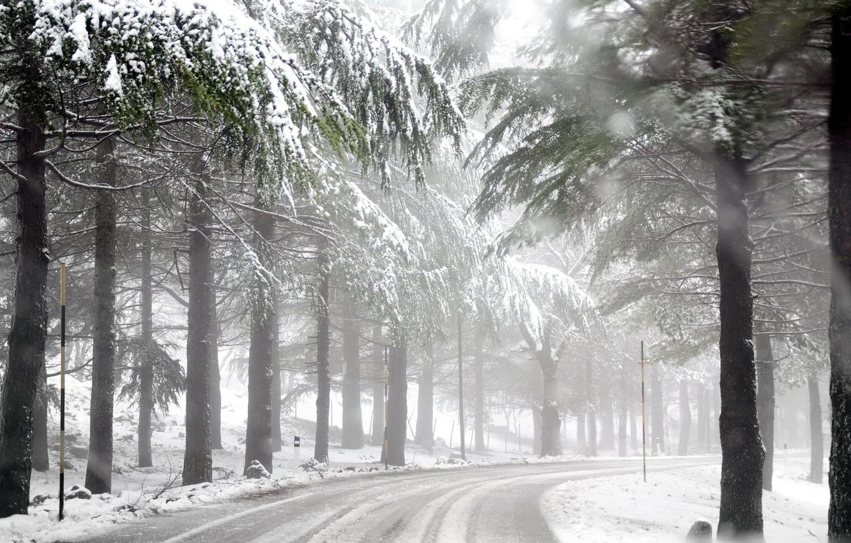 Фото обои зима, дорога, лес, туман