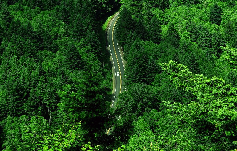 Фото обои дорога, зелень, машина